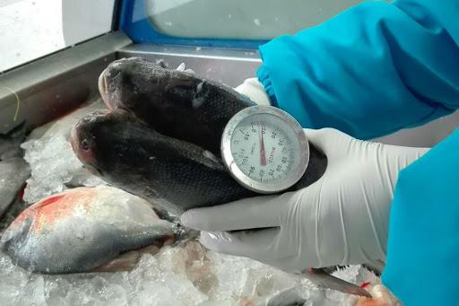 Buenas Prácticas de Manufactura (BPM) en el proceso de pescado fresco y congelado